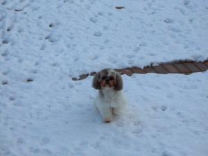 frozen-paw1