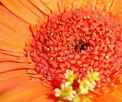orange-center