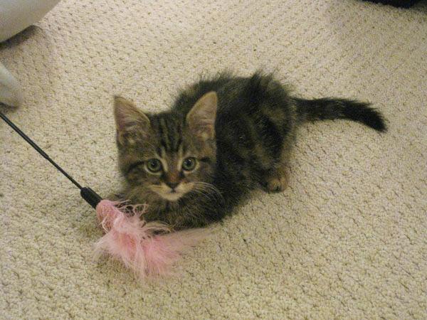 Kitten 3 Pose 1